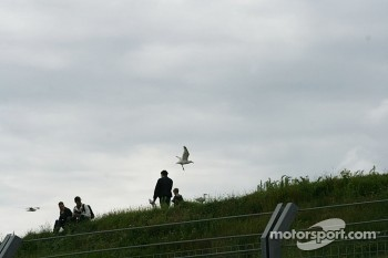 Spectators and gulls