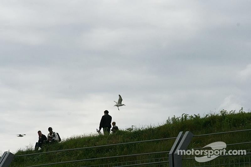 Spectators and gulls