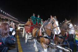 The Budweiser horse carriage