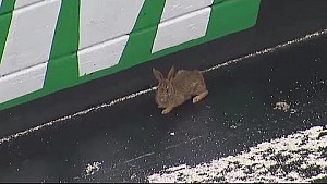 Rabbit stops trucks practice at Bristol Motor Speedway