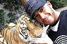 Hamilton se la juega con un impresionante tigre en México