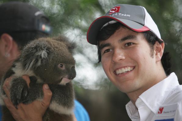 Sergio Perez e o Koala