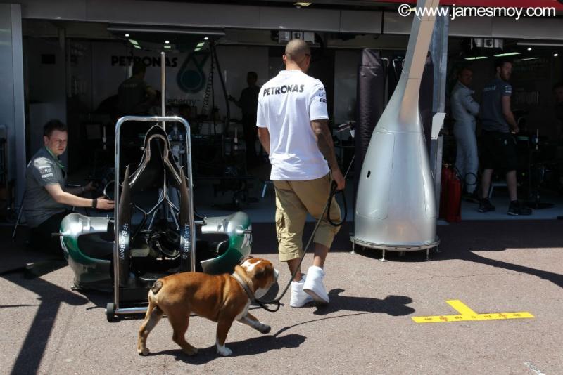 Hamilton passeia com o cachorro Roscoe
