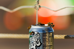 Bijen genieten van bier