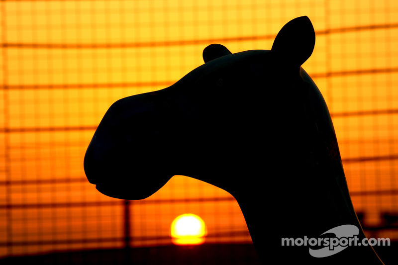 The sun sets over a camel at Bahrain circuit