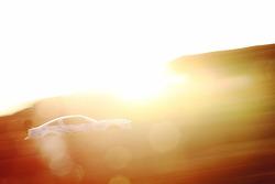 #78 福特 谢尔比 GT500: 卡什·辛格