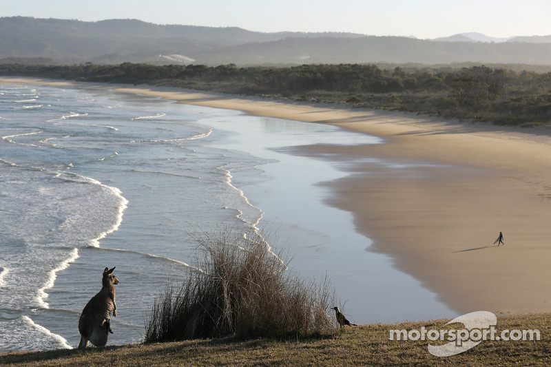 A kangaroo on the beach