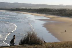 Un kangourou sur la plage