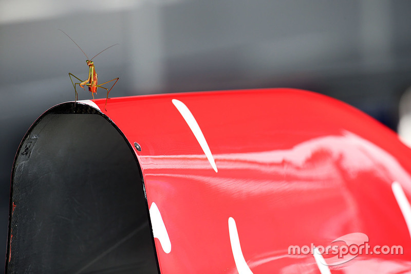 A Praying Mantis invites himself to the Red Bull Racing pit garages