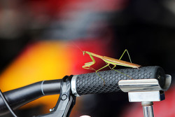 A Praying Mantis joins the Red Bull Racing в pit garage