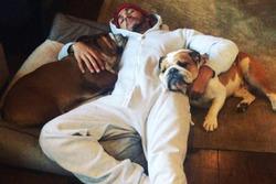 Lewis Hamilton descansa con sus perros Roscoe y Coco