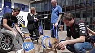 Are Formula E stars barking mad or just having a ruff time?