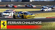 Ferrari Challenge APAC, Fuji 2016 - 1. Yarış özeti