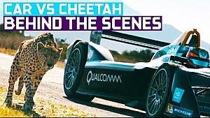 Carrera de arrastre: coche de Fórmula E contra guepardo (documental de Fauna vs coche)